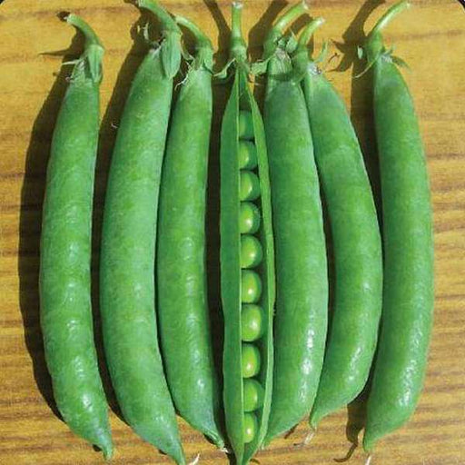 Peas Azad P 3 - Desi Vegetable Seeds - Nurserylive