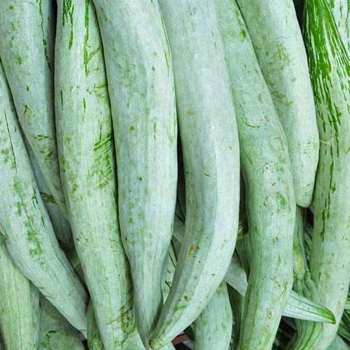 Snake Gourd Chachinda - Desi Vegetable Seeds - Nurserylive