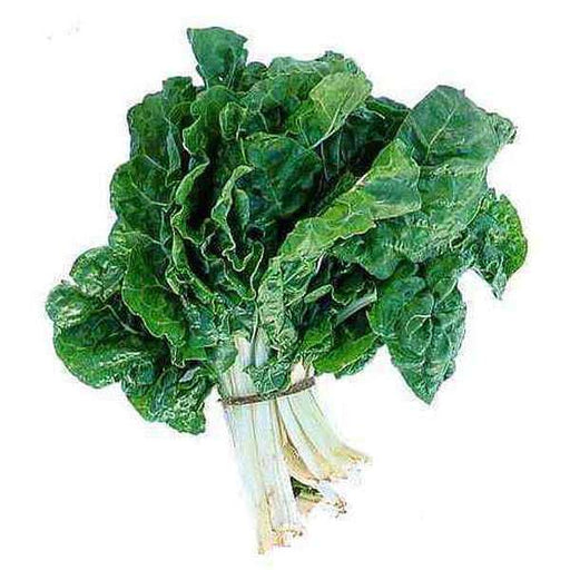 Spinach Kantewali - Desi Vegetable Seeds - Nurserylive