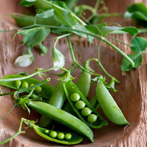Sugar Pea, Snow Pea - Vegetable Seeds - Nurserylive