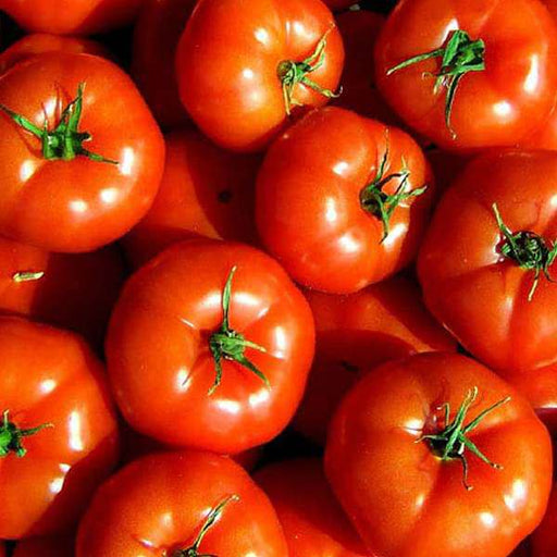 Tomato Marglobe - Organic Vegetable Seeds - Nurserylive