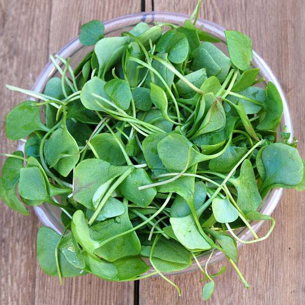 Water Cress - Herb Seeds - Nurserylive