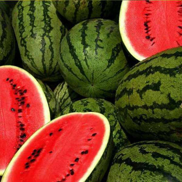 Water Melon F1 Aalam Daksh 55 - Fruit Seeds - Nurserylive