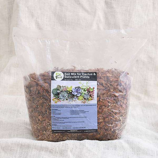 Potting Soil Mix for Cactus and Succulent plants - 3 kg - Nurserylive