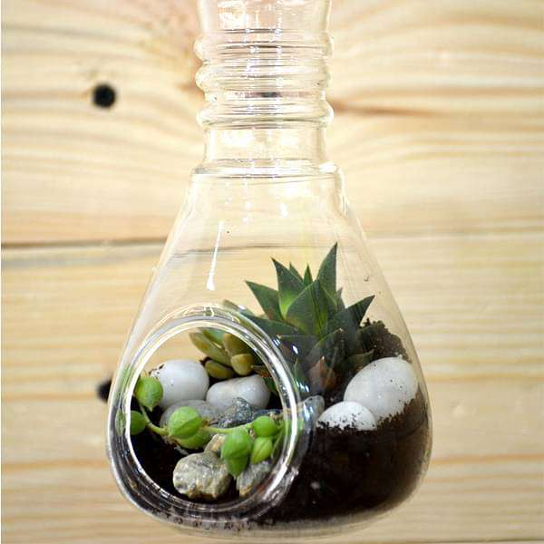 Bulb-shaped hanging terrarium (7in Ht) - Nurserylive