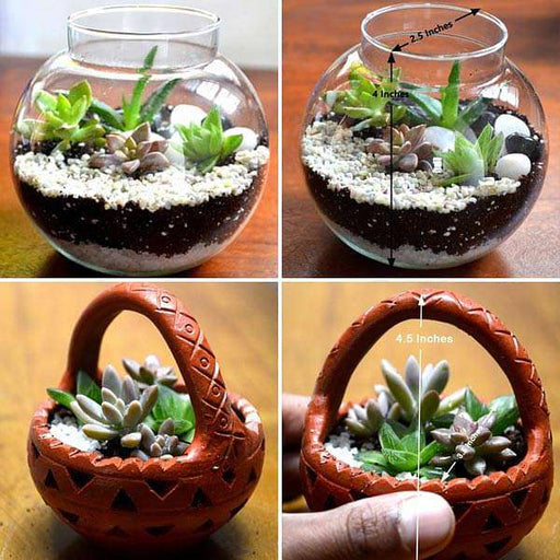Bunch of cute basket and terrarium - Nurserylive
