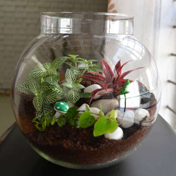 Colorful round terrarium (8in Ht) - Nurserylive