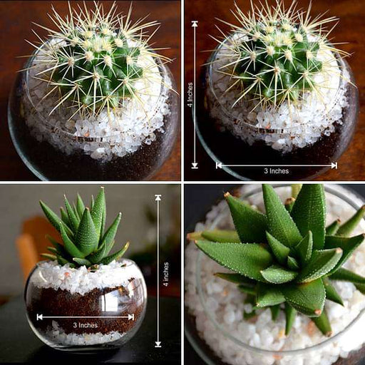 Desert in small glass bowl - Nurserylive