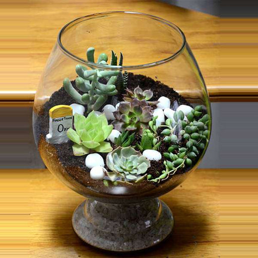 Enchanting wine goblet terrarium (10in Ht) - Nurserylive