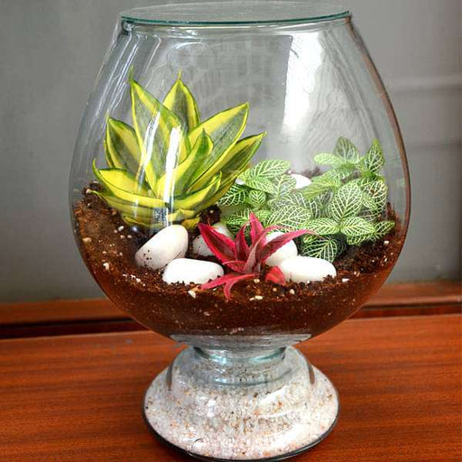 My hobbit closed goblet terrarium (10in Ht) - Nurserylive