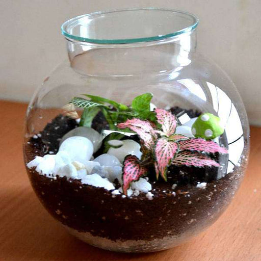 Round flask colorful terrarium (4in Ht) - Nurserylive