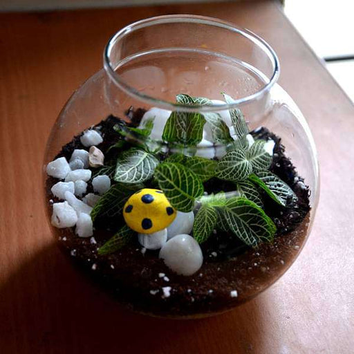 Round flask green terrarium (4in Ht) - Nurserylive