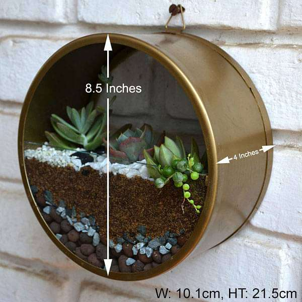 Wall mounting round terrarium (8.5in Ht) - Nurserylive