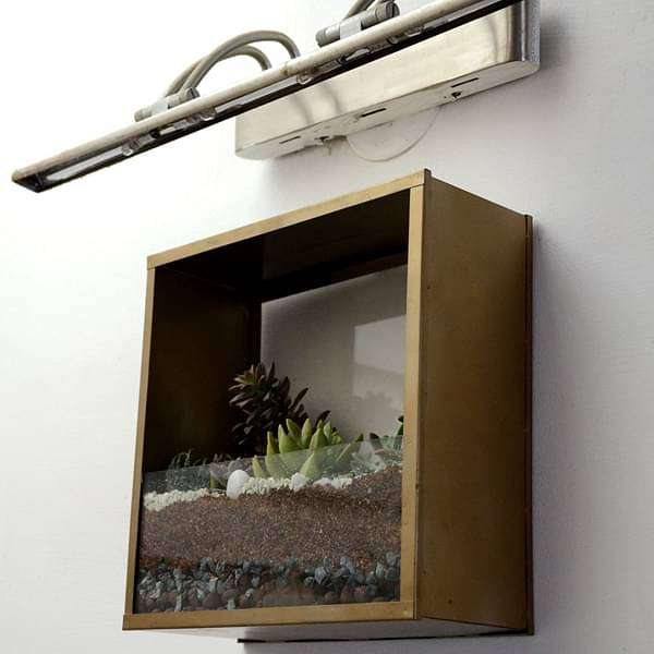 Wall mounting square terrarium (10in Ht)