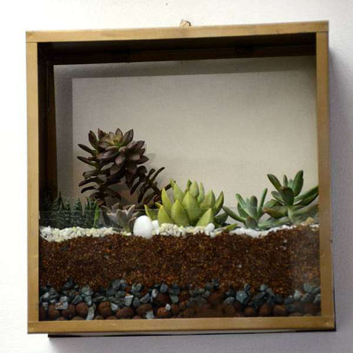 Wall mounting square terrarium (10in Ht) - Nurserylive