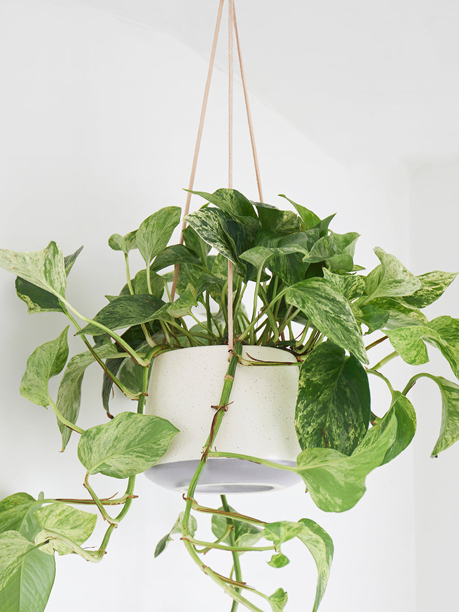 Cream Ceramic Indoor Hanging Plant Pot