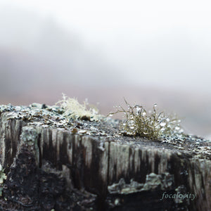 """Clarity In The Fog"" Photo on Canvas"