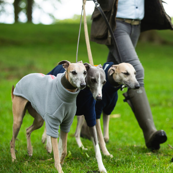 Whippet Dog Coats