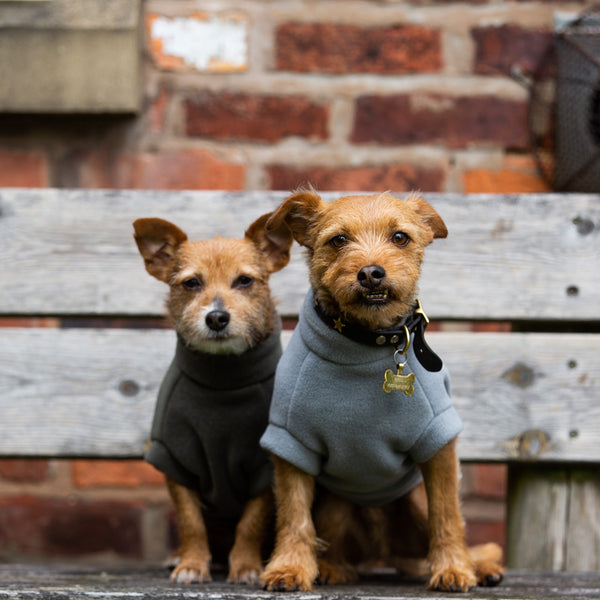 Small Terrier Dog Coats