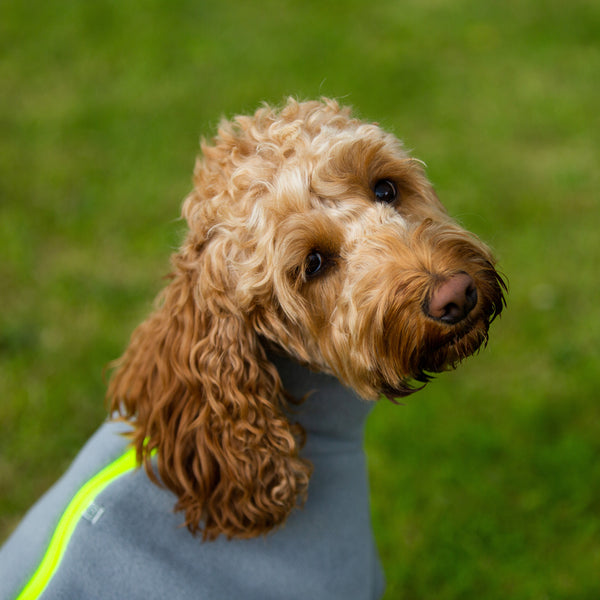 Cockapoo Dog Coat