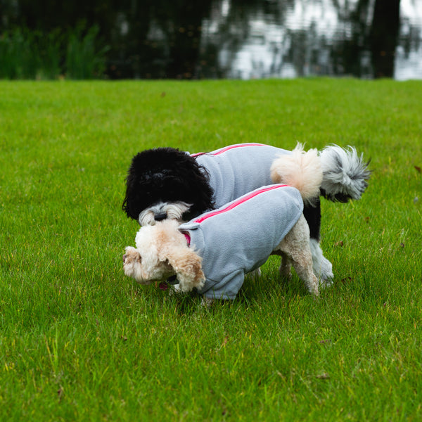 Cavapoo Dog Coat