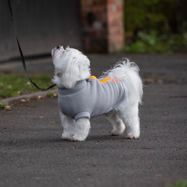 Maltese Dog Coat