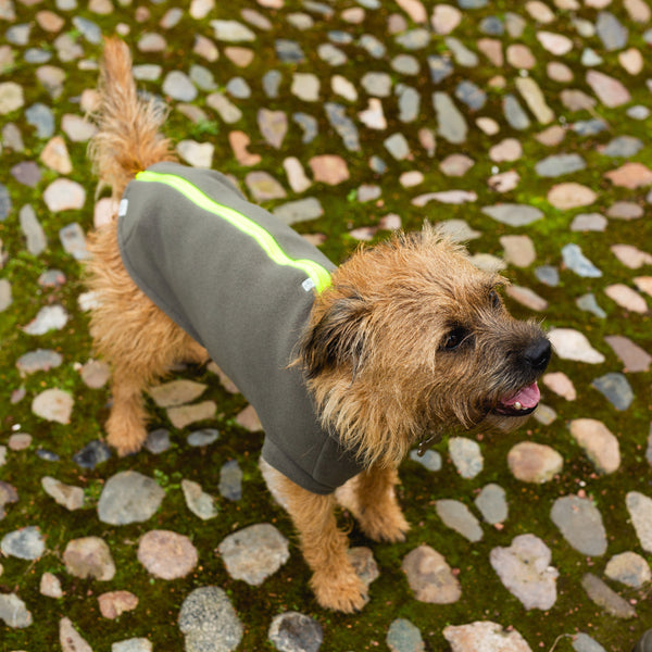 Large Terrier Dog Coat