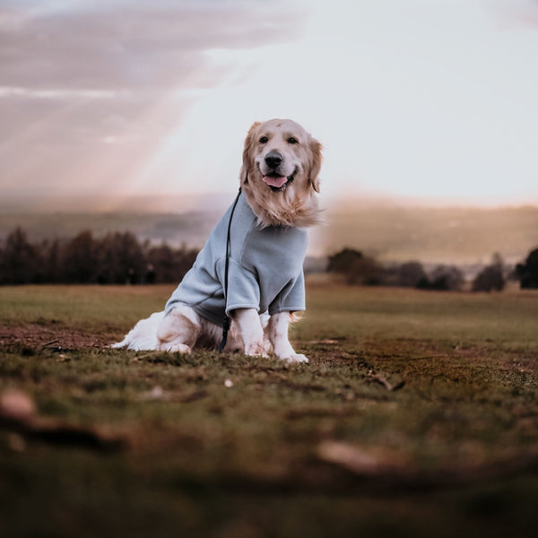 Golden Retriever Dog Coat