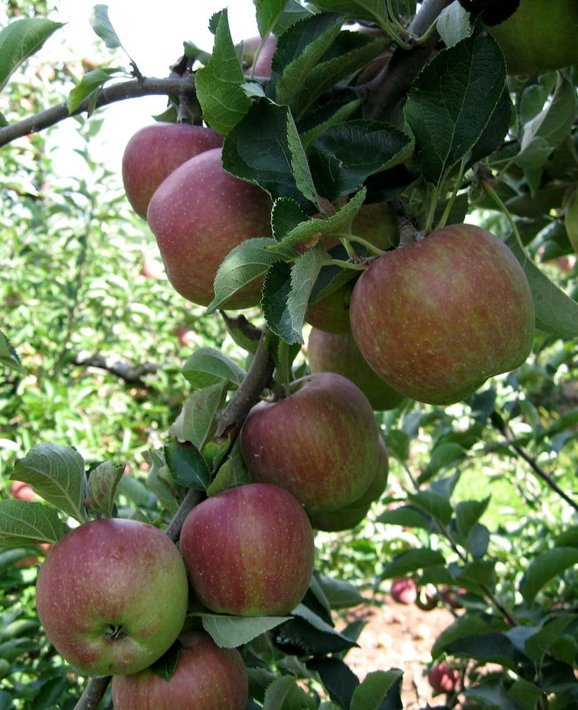 What's happening to our Apples?
