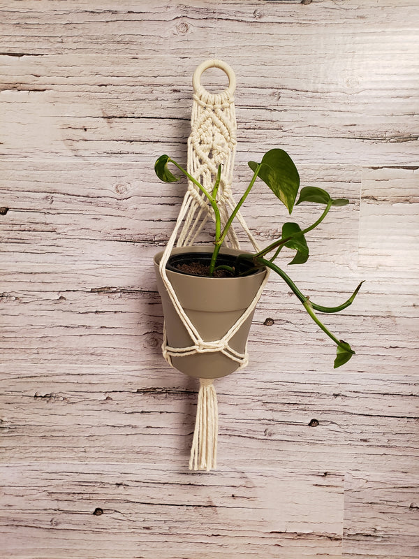 "Mini Macrame Plant Hanger with 4"" Pot"