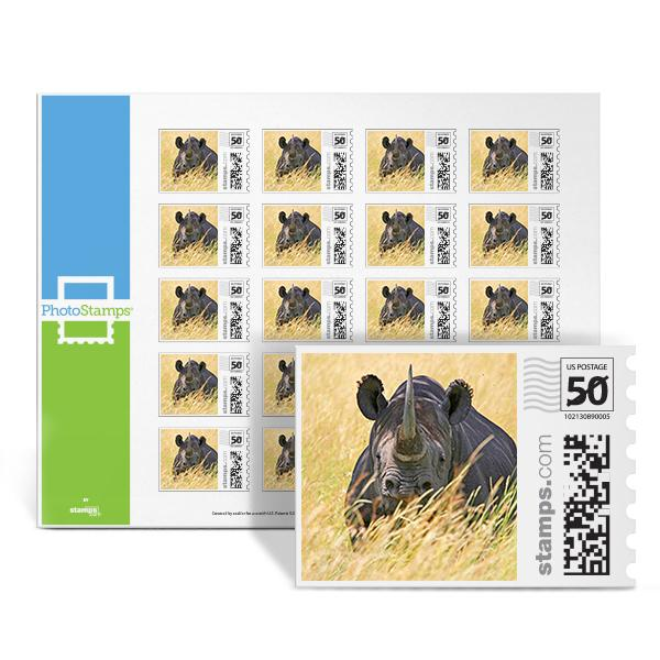 Black Rhino PhotoStamps