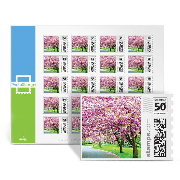 Cherry Blossom PhotoStamps