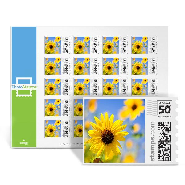 Daisies PhotoStamps