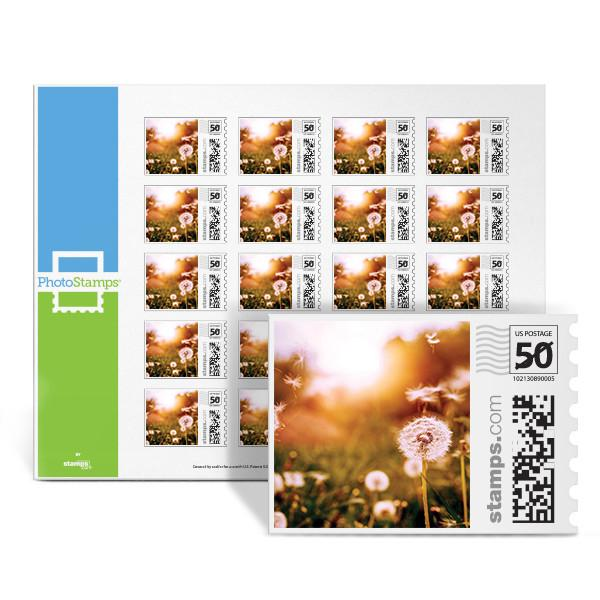 Dandelion Wishes PhotoStamps
