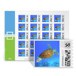 Hawksbill Turtle PhotoStamps
