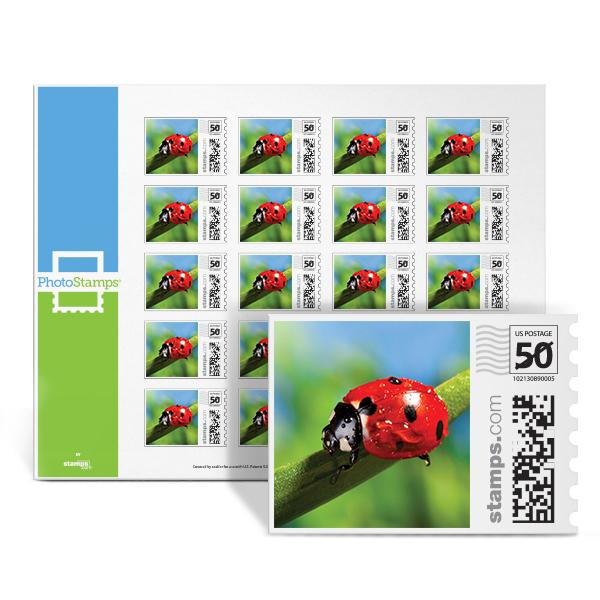 Ladybug in Spring PhotoStamps