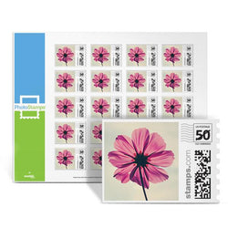 Pink Cosmos PhotoStamps