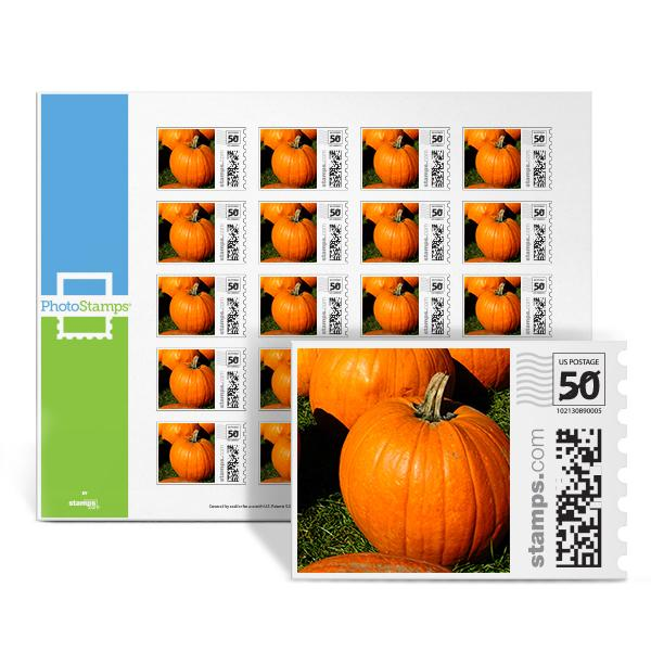 Pumpkin Patch PhotoStamps