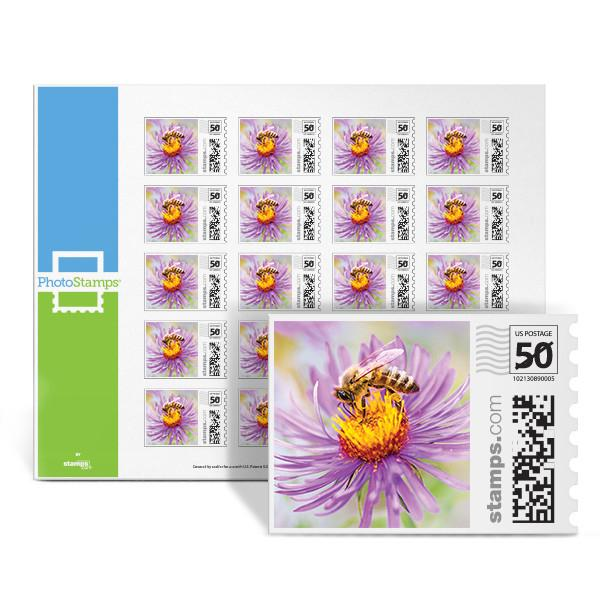 Spring Honeybee PhotoStamps