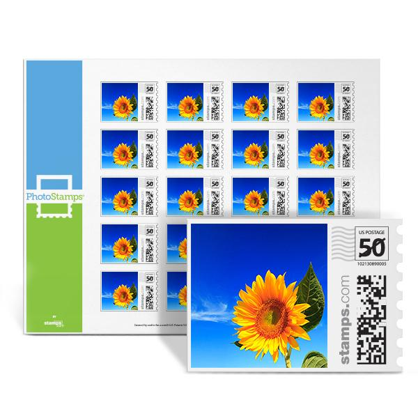 Sunflower Sky PhotoStamps