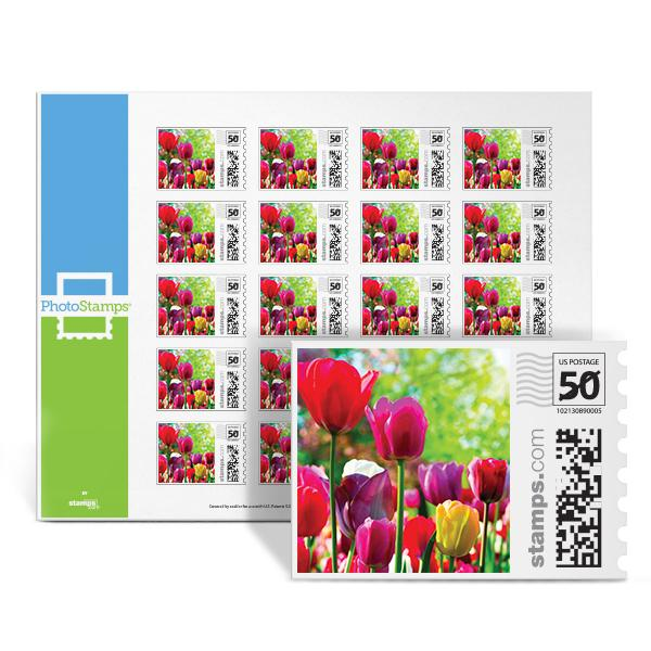 Tulips Galore PhotoStamps