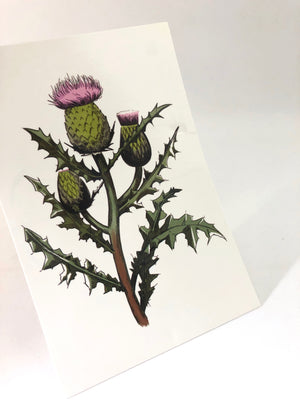 Prickly Weed The Scottish Thistle Post Card by Jim Tom for Tickle And Smash
