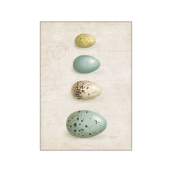 Bird Eggs II