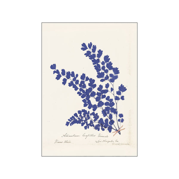 Botanical Fern III Blue