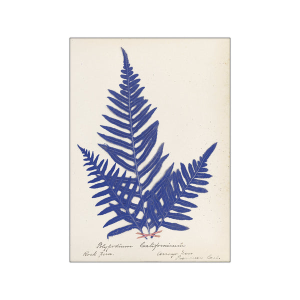 Botanical Fern XI Blue