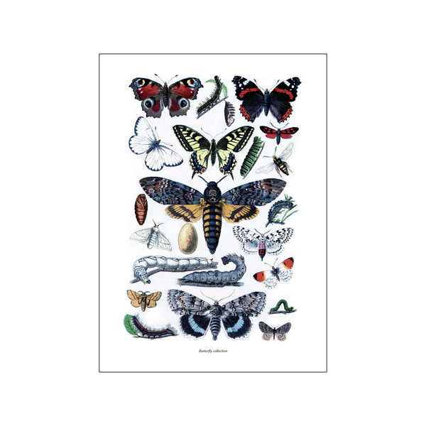 Collection Butterfly