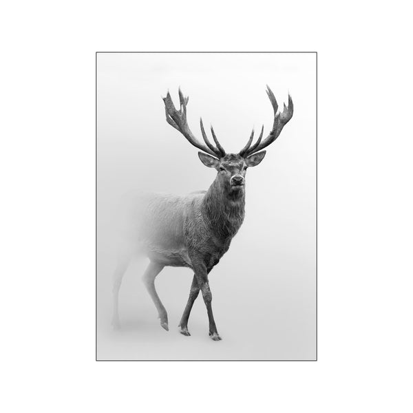 Deer In Fog