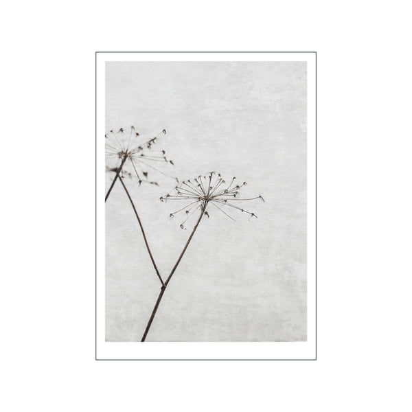 Dried Flower 1