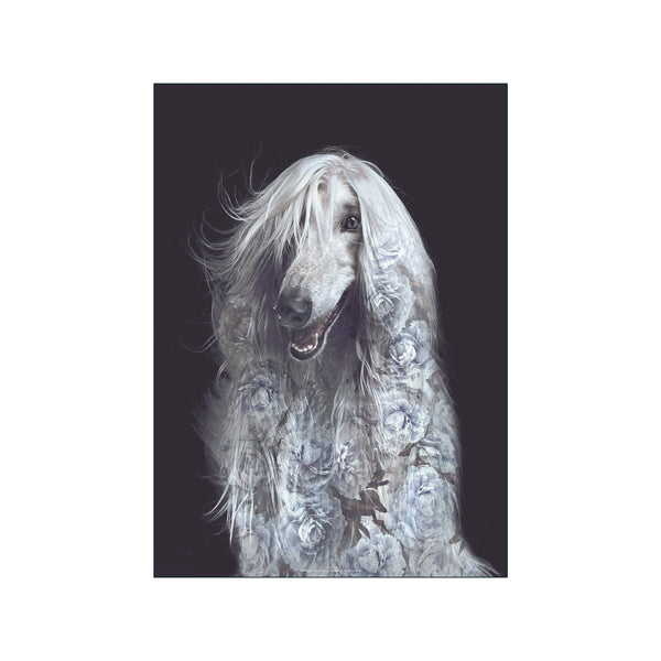 Portraits Afghan Dog