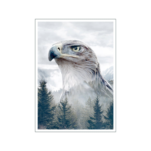 Portraits Caucasian Eagle